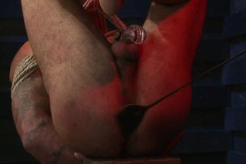 tasty homosexual fastened And ass ball sex cream flow