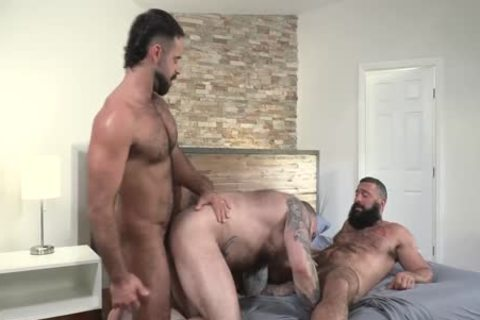 Three yummy Bears Teddy Torres, Alex Tikas, Alexander Kristov